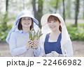 アスパラ農家 22466982