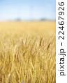 麦畑 麦 畑の写真 22467926