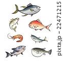 魚 マグロ、アジ、タイ、エビ、イワシ、サケ、フグ 22471215