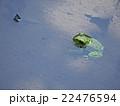 カエル 両生類 沼の写真 22476594