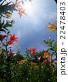楽園 22478403