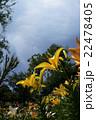 大空と花々 22478405
