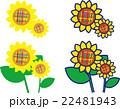 ひまわり夏の花 22481943