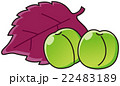 青梅 梅 紫蘇のイラスト 22483189