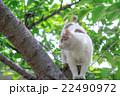 樹上のミケっち 22490972