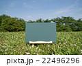 原っぱの黒板 22496296
