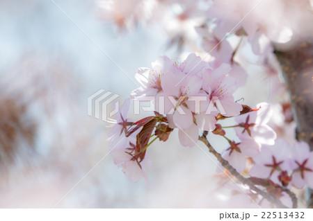 春の香り2 22513432