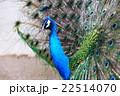 動物園 22514070