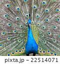 動物園 22514071