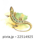 Lizard. Watercolor illustration 2 22514925