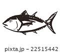 鮪 魚類 魚のイラスト 22515442