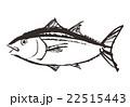鮪 魚類 魚のイラスト 22515443