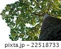 大きい 森林 林の写真 22518733