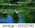 睡蓮の咲く池 22522762