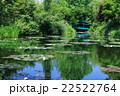 睡蓮の咲く池 22522764