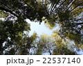青空に伸びる竹林 22537140