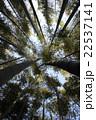 青空に伸びる竹林 22537141