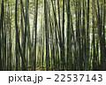 竹林 22537143