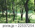 新緑の森 22537254