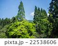 針葉樹と新緑 22538606