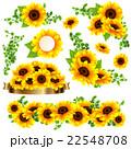 向日葵の夏らしい綺麗なフレーム 22548708