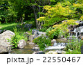 水辺 川 小川の写真 22550467