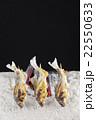 アユの塩焼き いろり焼きイメージ 22550633
