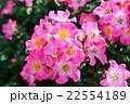 千葉県八千代市の京成バラ園 22554189