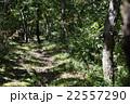 三瓶山の林道 22557290