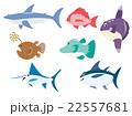 海の魚7種 22557681