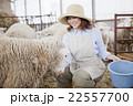 羊農家の女性 22557700