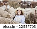 羊農家の女性 22557703