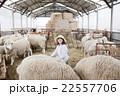 羊農家の女性 22557706