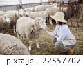 羊農家の女性 22557707