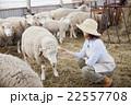 羊農家の女性 22557708
