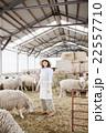羊農家の女性 22557710