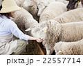 羊農家の女性 22557714