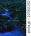 ホタル 水辺 光の写真 22562192