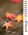 ベンチに落ちたモミジの葉 22563544
