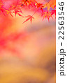 紅葉 もみじ 色づきの写真 22563546