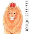 王様ライオン 22564657