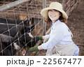 養豚 女性 22567477