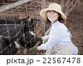 養豚 女性 22567478