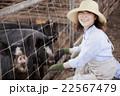 養豚 女性 22567479