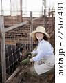 養豚 女性 22567481