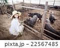 養豚 女性 22567485