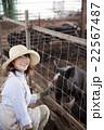 養豚 女性 22567487