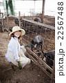 養豚 女性 22567488