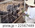 養豚 女性 22567489