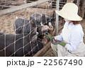 養豚 女性 22567490